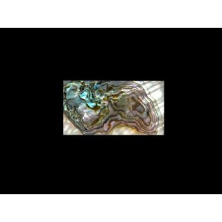 Abalone - Mutterkern